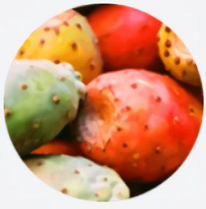 Extractul din Opuntia ficus