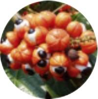 Extract din semințe de guarana