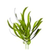 Extractul de alge